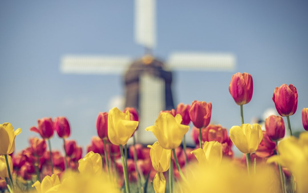 Tulpenblüte Holland & Floralien Gent